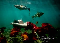 Model in red is photographed underwater along with a group of fish including orange garibaldi in the ocean next to Avalon, Catalina Island, CA
